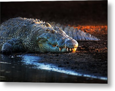 Nile Crocodile On Riverbank-1 Metal Print by Johan Swanepoel