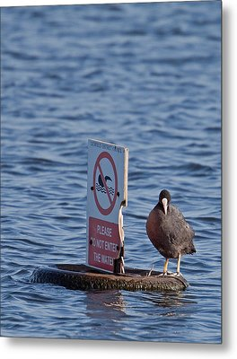 No Swimming Metal Print