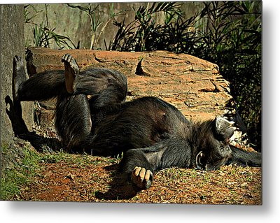 Metal Print featuring the photograph No Worries by Jessica Brawley
