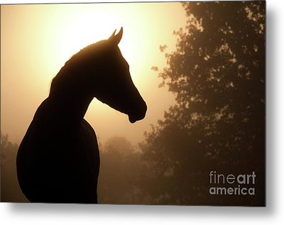 Noble Profile Metal Print