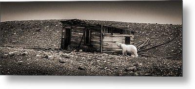Nobody Home - Black And White Polar Bear Photograph Metal Print by Duane Miller