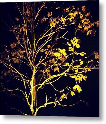 Nocturnal Tree Metal Print