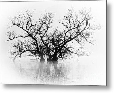 Norris Lake April 2015 5 Metal Print by Douglas Stucky