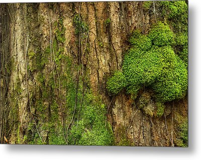 Metal Print featuring the photograph North Side Of The Tree by Mike Eingle