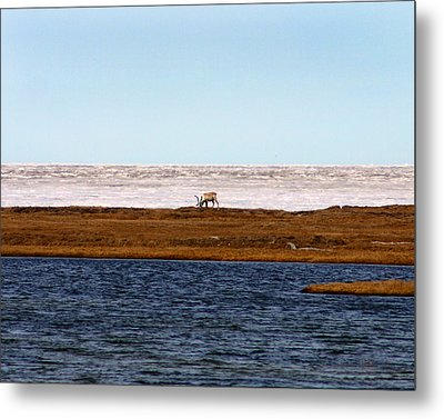 North Slope Metal Print by Anthony Jones