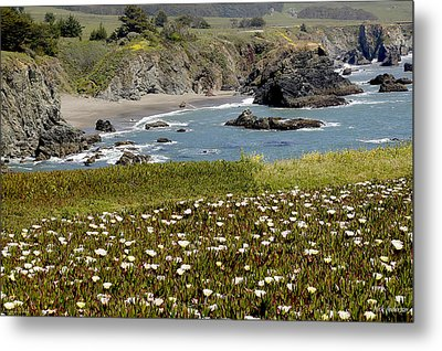 Northern California Coast Scene Metal Print