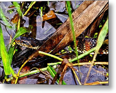 Metal Print featuring the mixed media Northern Water Snake by Olga Hamilton