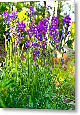 Metal Print featuring the photograph Northern Wildflowers by Tom Kelly