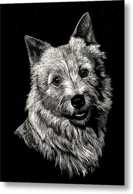 Norwich Terrier Metal Print