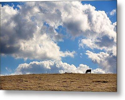 Not A Cow In The Sky Metal Print by Peter Tellone