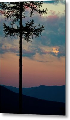 Metal Print featuring the photograph Not Quite Clearcut by Albert Seger