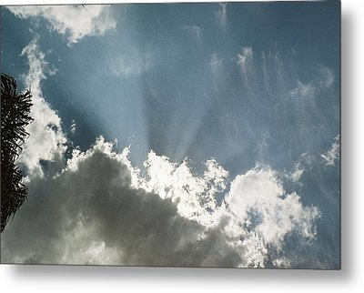 Not So Hidden Metal Print by LDPhotography Stephanie Armstrong