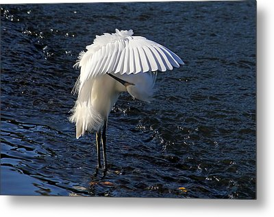 Not Under Here - Birds - Snowy Egret Metal Print by HH Photography of Florida