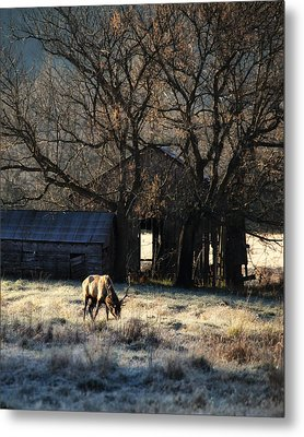 Metal Print featuring the photograph November Sunrise by Michael Dougherty