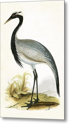Numidian Crane Metal Print by English School