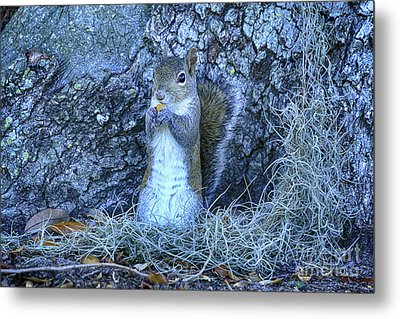 Metal Print featuring the photograph Nuts Anyone by Deborah Benoit
