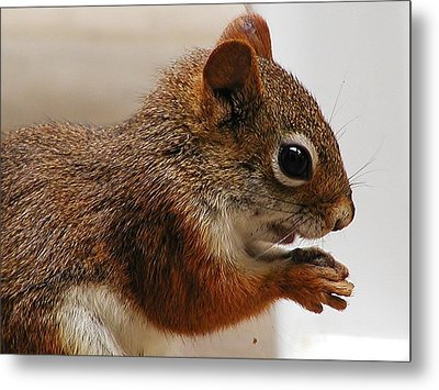 Nutty Guy Metal Print by Martha Ayotte