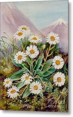 Nz Mountain Daisy Metal Print by Val Stokes