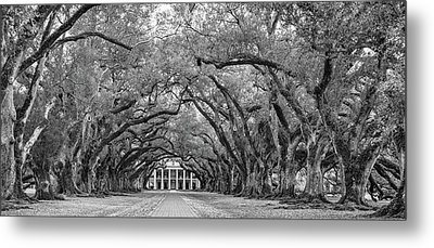 Oak Alley 4 Bw Metal Print by Steve Harrington