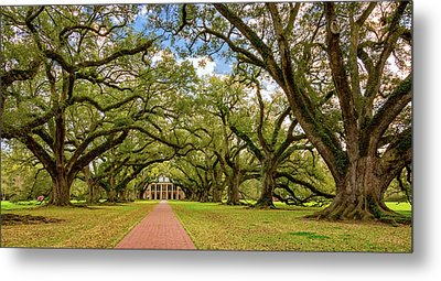 Oak Alley 5 Metal Print by Steve Harrington