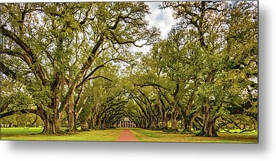 Oak Alley 6 Metal Print by Steve Harrington
