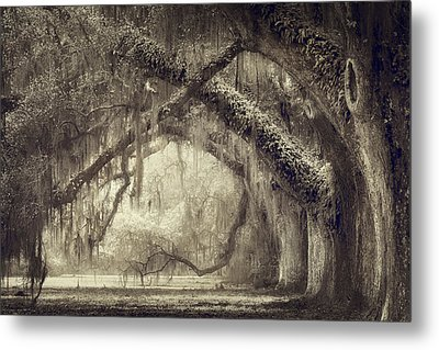 Oak Avenue Metal Print by Magda Bognar