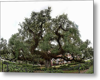 Metal Print featuring the photograph Oak by Cecil Fuselier