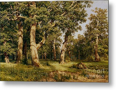 Oak Grove Metal Print