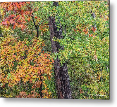 Oak Hickory Woodland Metal Print by Tim Fitzharris