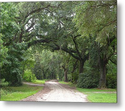 Oak Laden Back Road Metal Print