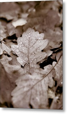 Oak Leaf Metal Print by Frank Tschakert