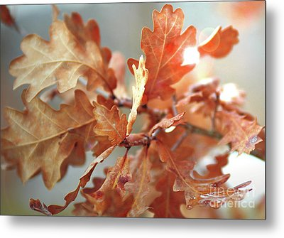 Oak Leaves In Autumn Metal Print by Wilhelm Hufnagl