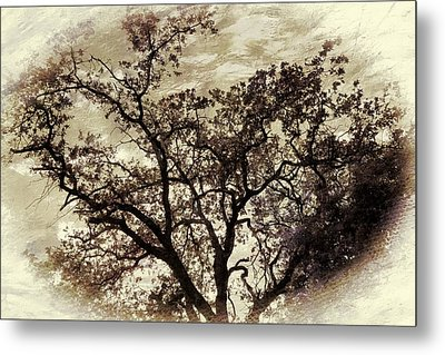 Metal Print featuring the photograph Oak Tree by Athala Carole Bruckner