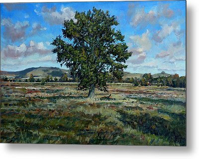 Oak Tree In The Vale Of Pewsey Metal Print by Andrew Taylor