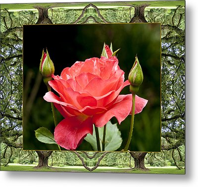 Oak Tree Rose Metal Print by Bell And Todd