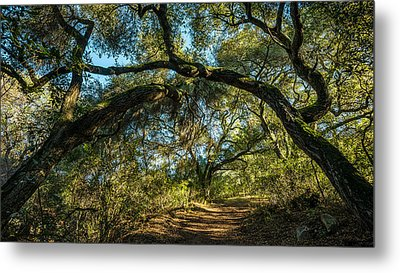Metal Print featuring the photograph Oaks Arching Over Trail At Daley Ranch by Alexander Kunz