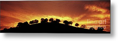 Metal Print featuring the photograph Oaks On Hill At Sunset by Jim and Emily Bush