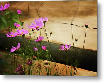 Metal Print featuring the photograph Oasis In The Desert by Lana Trussell
