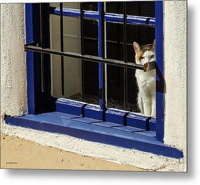 Observant Kitty In Window Metal Print by Allen Sheffield