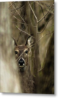 Observed  Metal Print by Bruce Patrick Smith