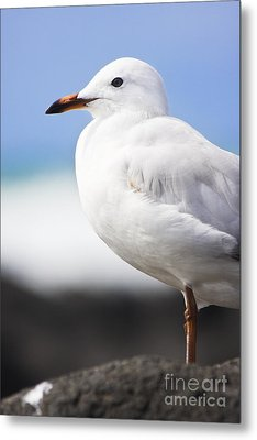 Ocean Bird Metal Print