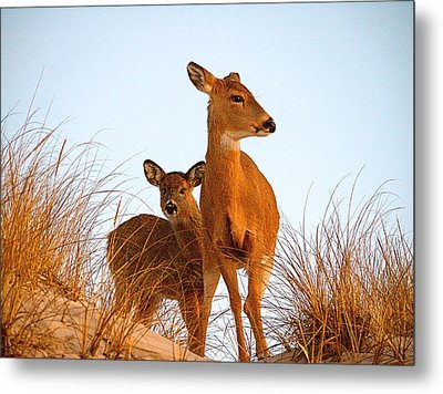 Ocean Deer Metal Print by  Newwwman