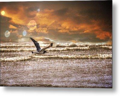 Beach Metal Print featuring the photograph Ocean Flight by Aaron Berg