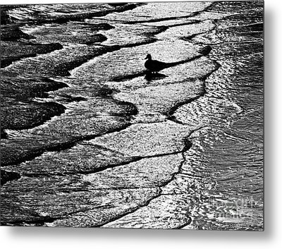 Ocean Surf Beach Scene In Black And White Format Metal Print by Carol F Austin