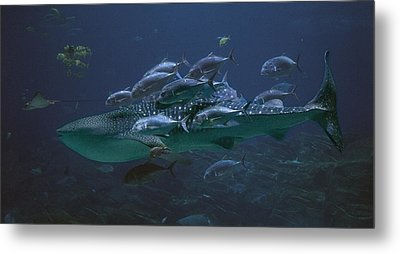 Ocean Treasures Metal Print by Betsy Knapp