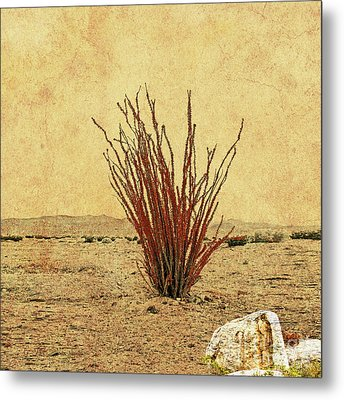 Ocotillo - The Desert Coral Metal Print