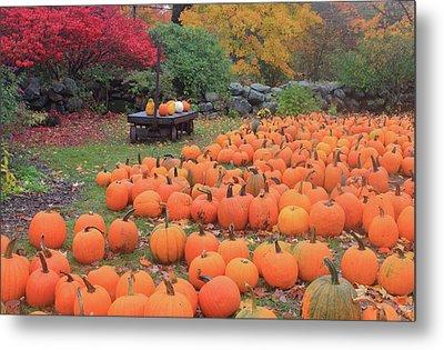 October Harvest Metal Print by John Burk
