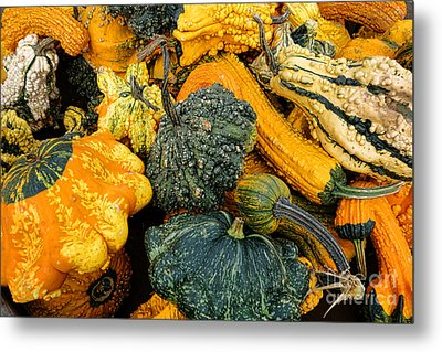 Odd Gourds One Metal Print by Olivier Le Queinec