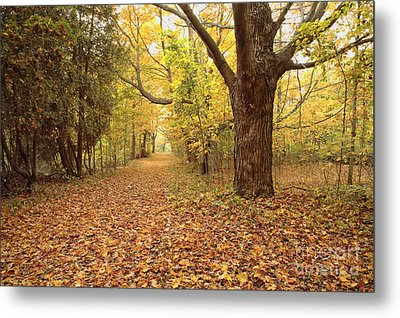 Odiorne Point State Park - Rye New Hampshire Metal Print by Erin Paul Donovan