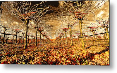 Metal Print featuring the photograph Off Of The Vine by Steve Siri
